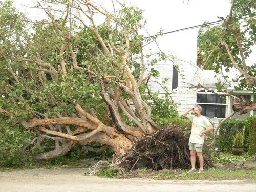 После урагана во Флориде. Не поднять...