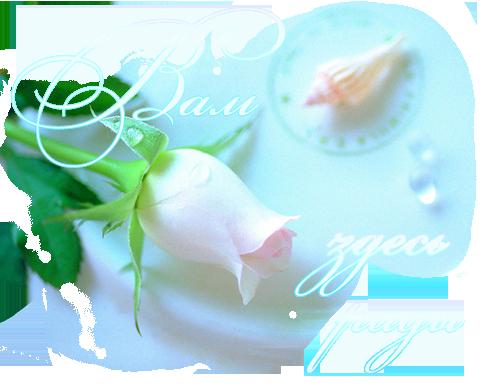 роза и ракушка(вам здесь рады)
