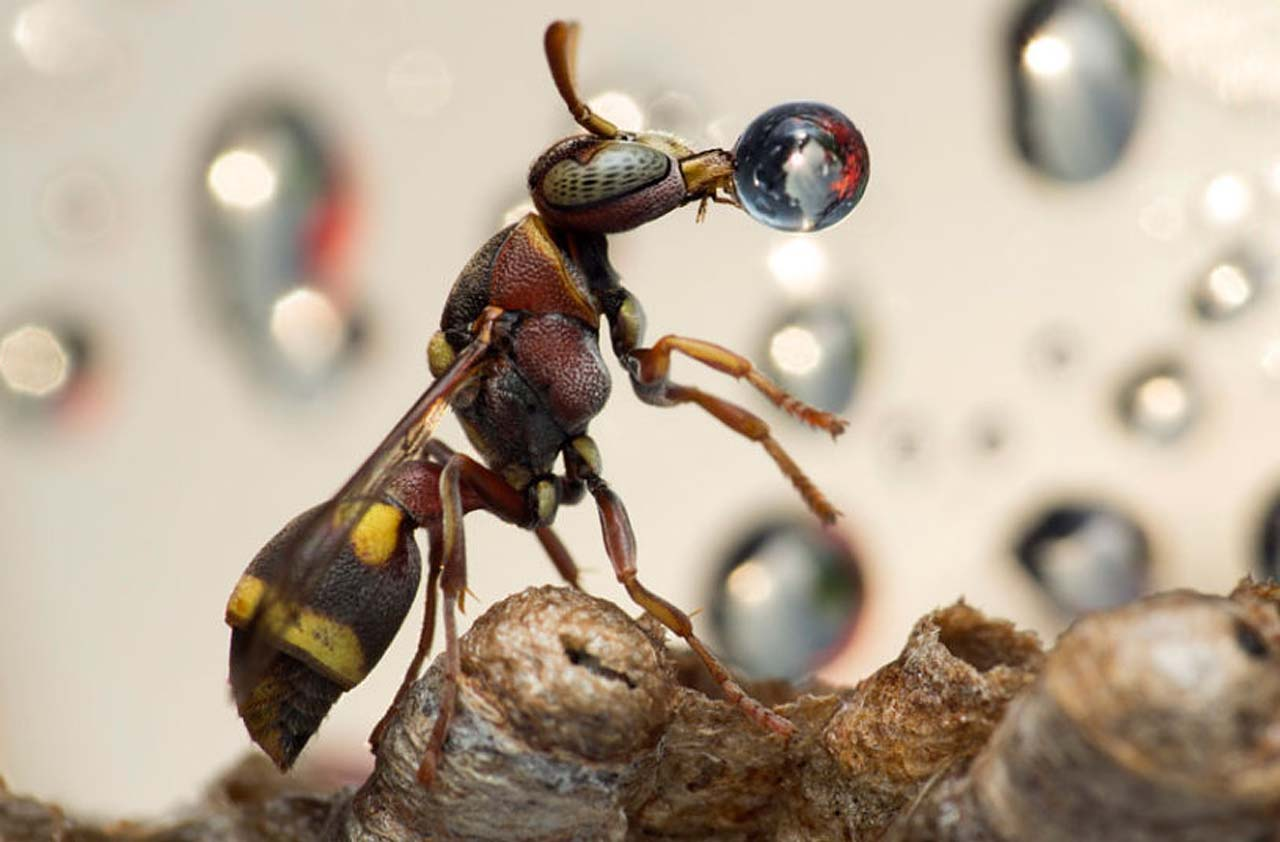 Bubble blowing wasps