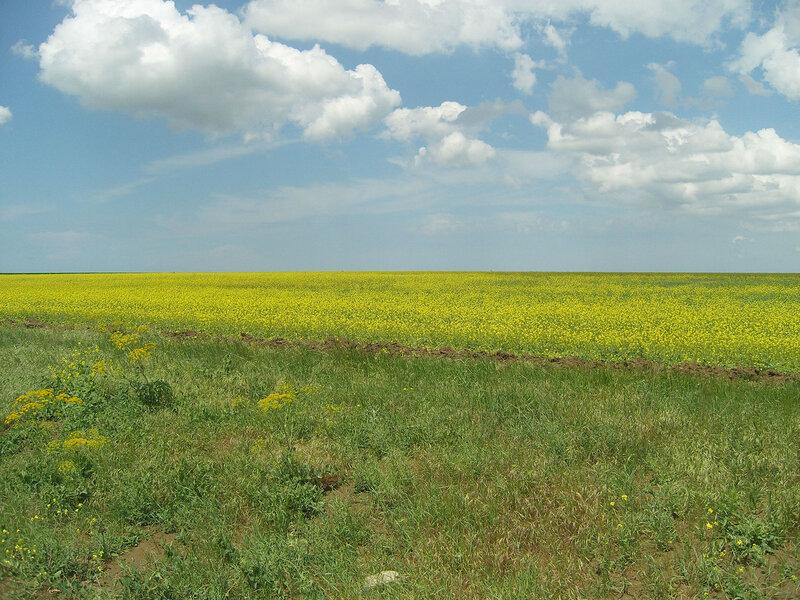 цветущее поле в степи. Меж Чаудой и М-17