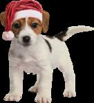 Joelle_ChristmasPast_Ell8.png