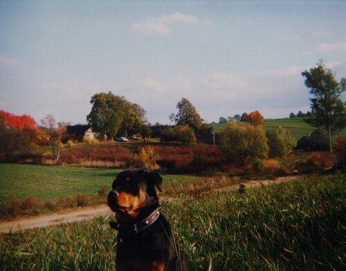 Поиск по запросу «Громовичи» у автора fil2006k