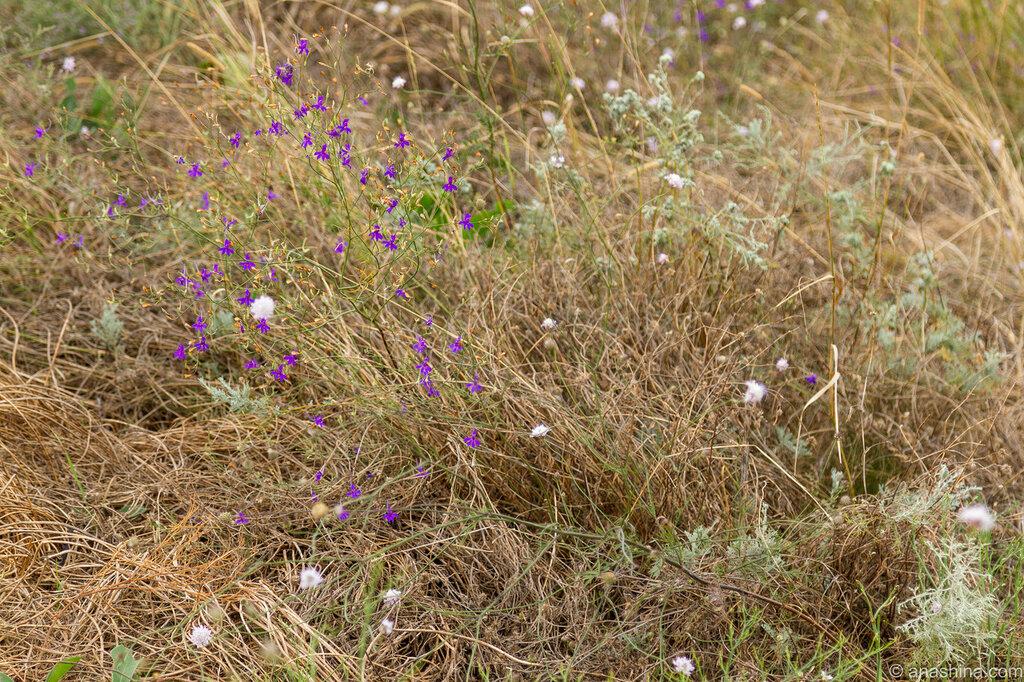 Степные цветы и травы