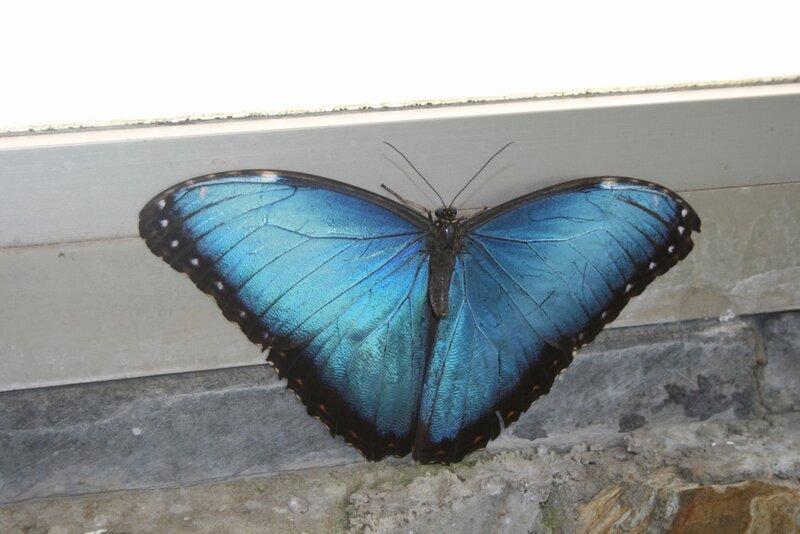 Парк бабочек в Икод де лос Винос, Тенерифе