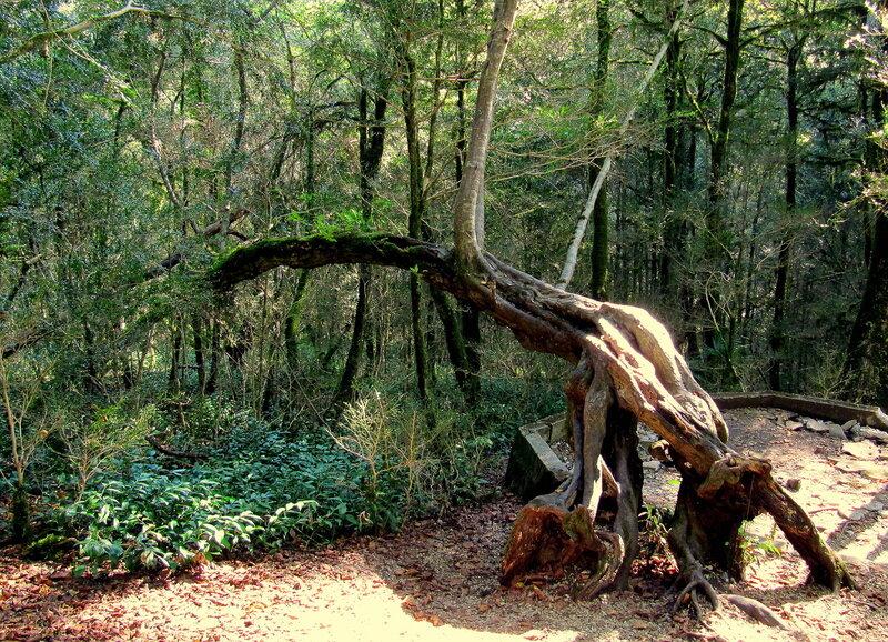 Метаморфоза южного дерева