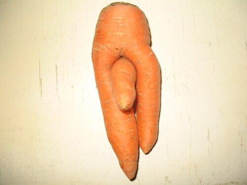 Морковь 2007