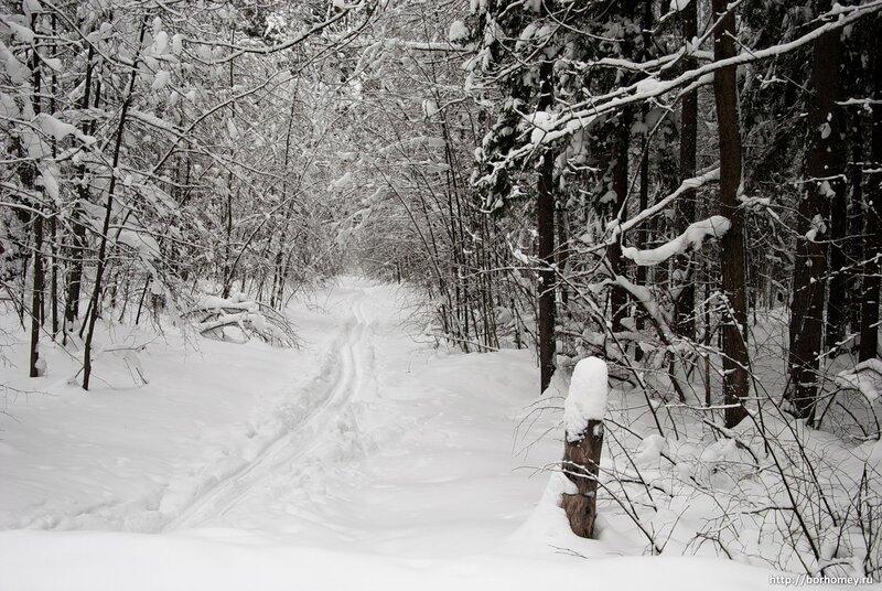 лесной столбик зимой