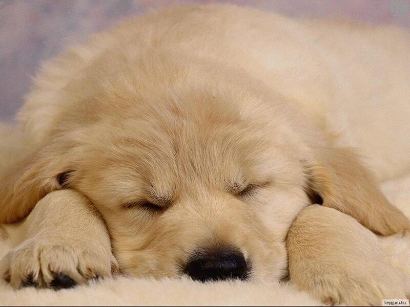 Собачки спят