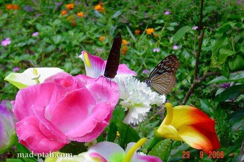 бабочки, музей бабочек