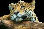 клипарт-животные