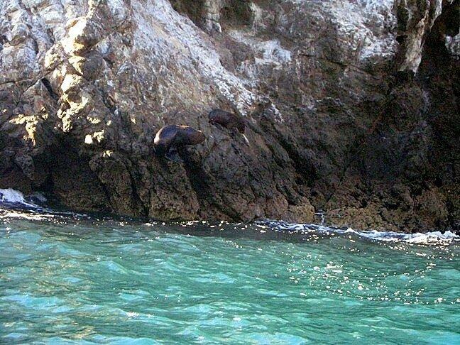 Два тюленя лежат на скале в Тихом океане