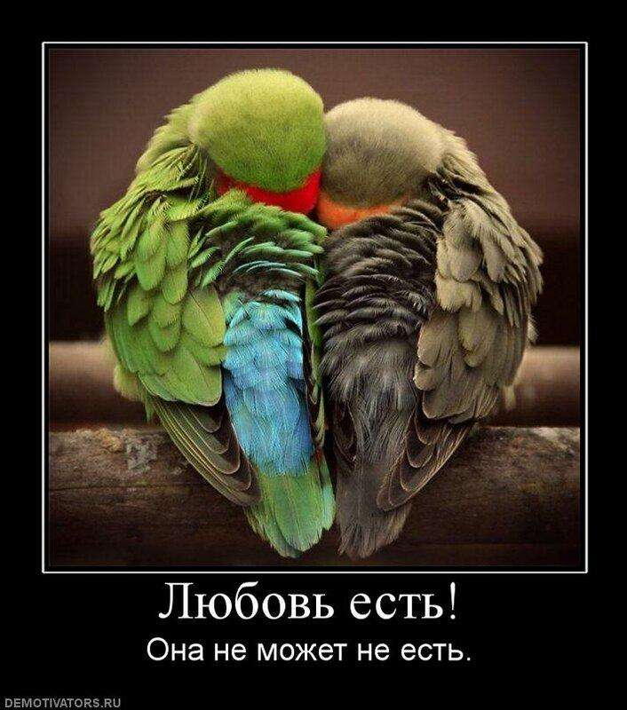 http://img-fotki.yandex.ru/get/5501/posmetnaia-el.c8/0_479ae_7ab1c521_XL.jpg