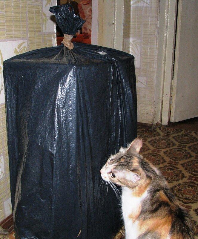 Что там в коробке?
