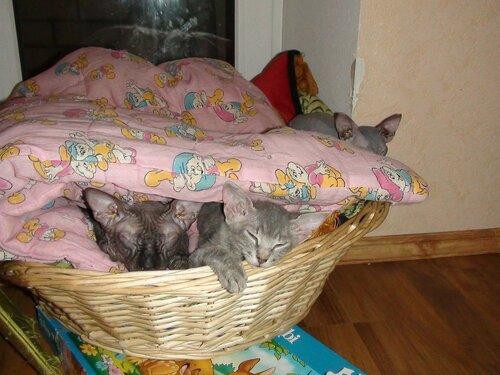 Укрывшись тёплым одеялом...