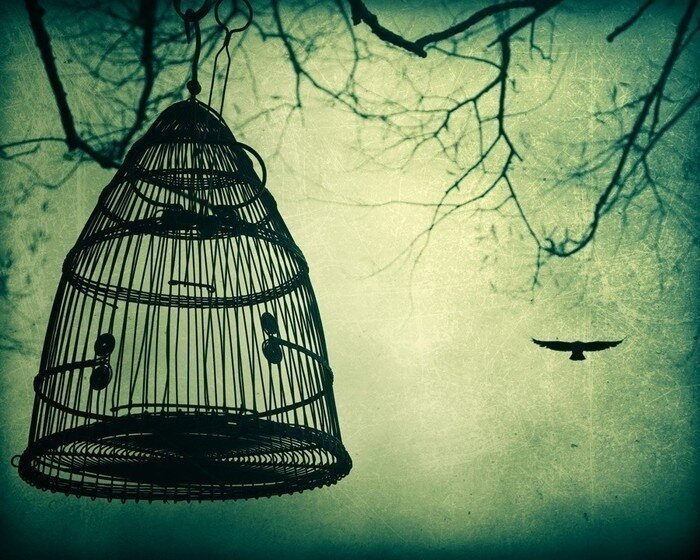 Фотограф Irene Suchocki