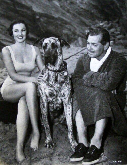 Gene Tierney, Clark Gable, 1953