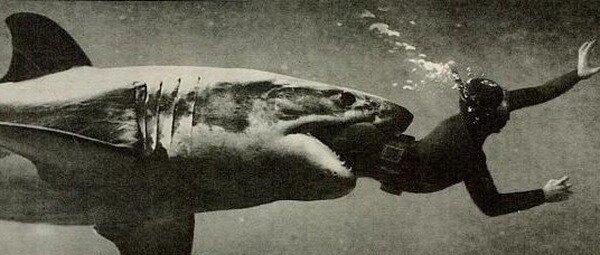 Выжившие после встречи с акулой: реальные фото-свидетельства.