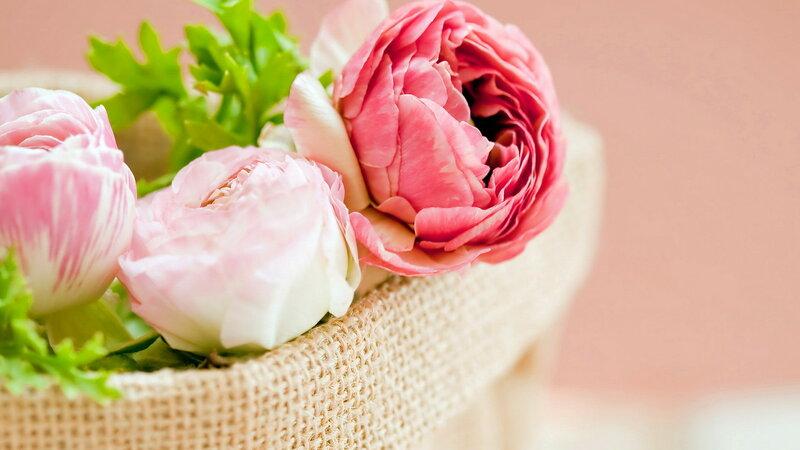 The Secret Language of Flowers Samantha Gray
