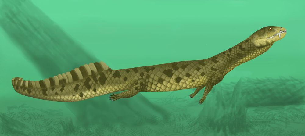 8. Pachyrhachis или Пахирахис Пахирахис — вымерший род змей с хорошо развитыми задними ногами