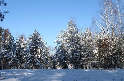 Чародейкою зимою околдован лес стоит......