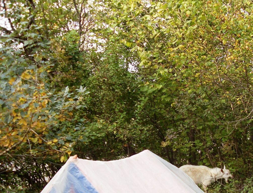 11  октября 2008, под Горячим Ключом, в лесу(177).JPG