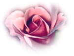 12930417370_fleurs_nikita.png