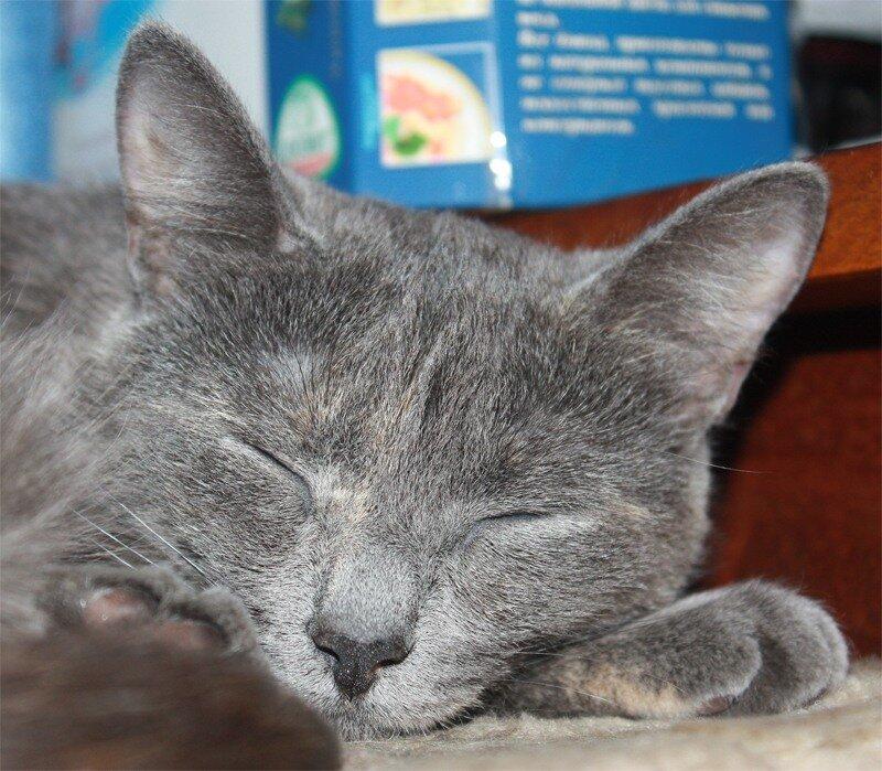 Портрет спящей...