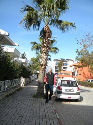 припарковались под пальмой*