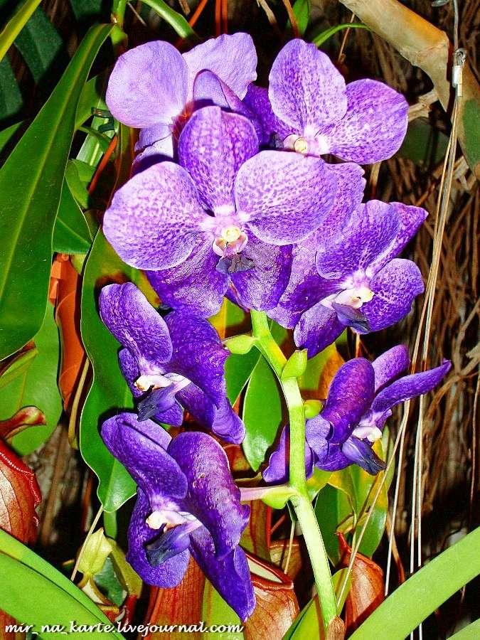 нажатии любой фото орхидей в тунисе них считаются уже