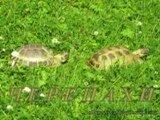Летом черепахи гуляют в саду