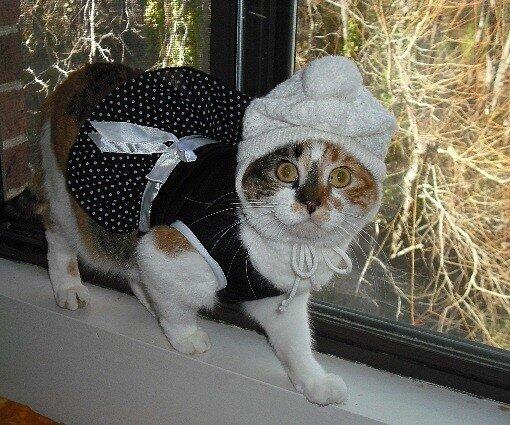 Для кошек всего мира существует множество различныx костюмов, в том числе пенеток, комбинезонов, а так же платьев.