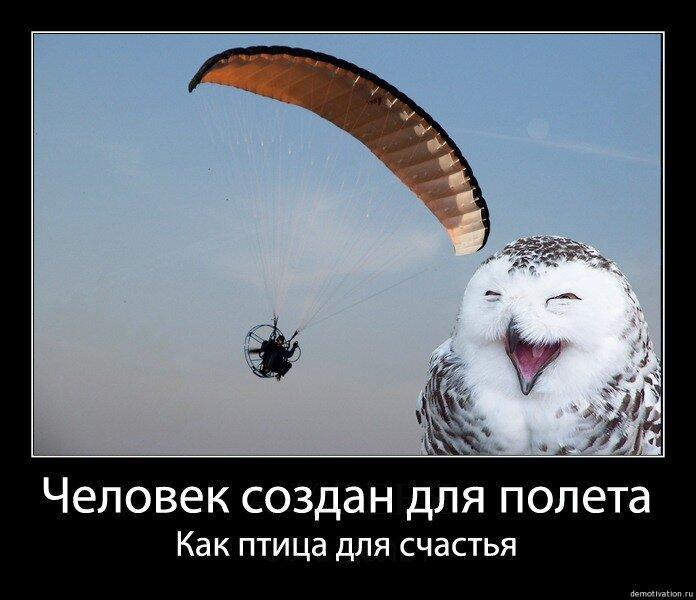 демотиваторы птица счастья основном разговор будет