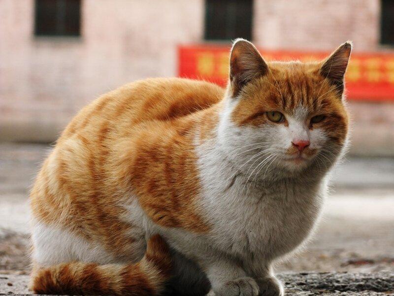 Усталый кот