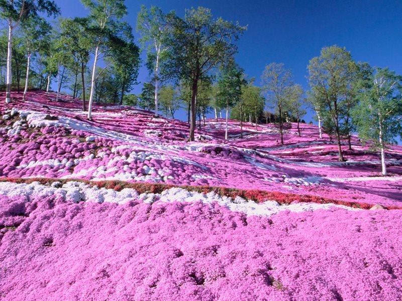 Самые красочные места Земли (12 фото)