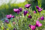 394 Цветы