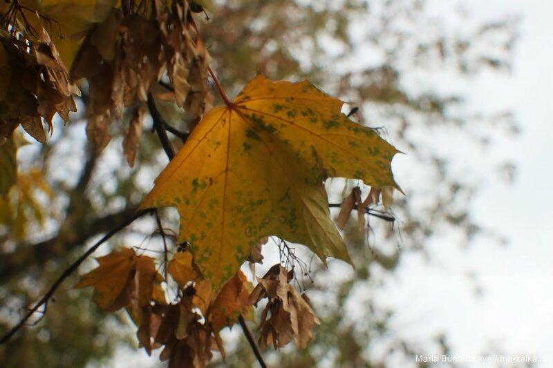 Дыхание осени, Саратов, 02 ноября 2015 года
