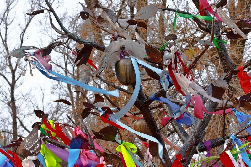 зачем привязывают ленточки к деревьям Центральный