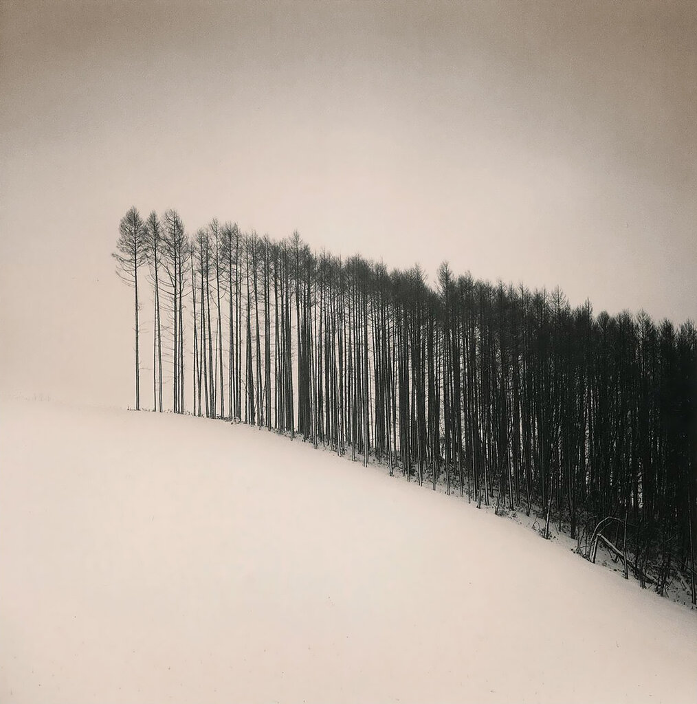 Forest Edge, Michael Kenna  Japan, 2004