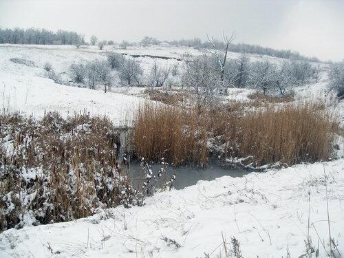 Зима, камыши, вода