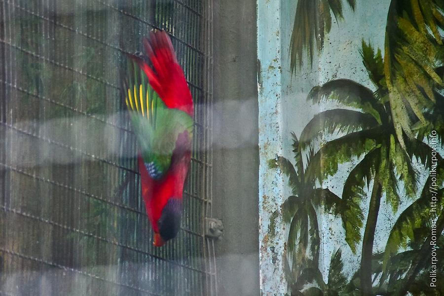 0 c4fb9 e0844a30 orig Парк птиц Jurong в Сингапуре
