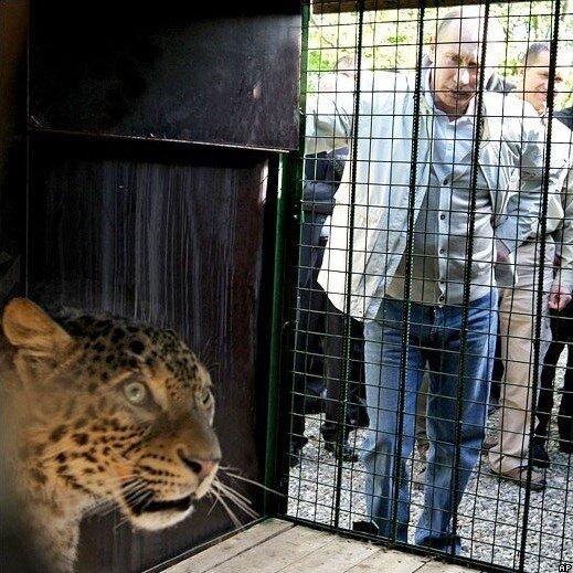 В.В.Путин посетил сочинский Национальный парк, где выпустил из клетки в...