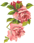 riri-card25-pinkroses.png