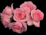 rosenrosa032.png