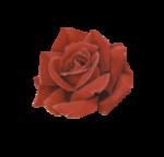 rosenrot024.png