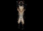 сиамские кошки (11).png