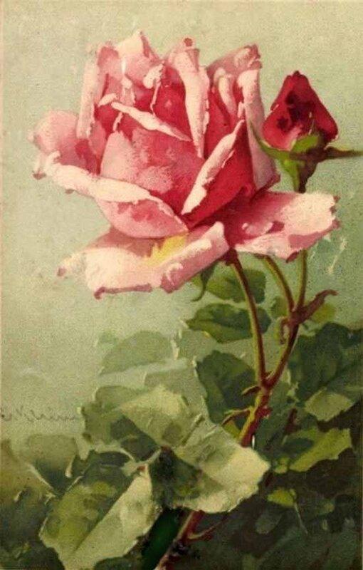 К. Кляйн. Роза и бутон.