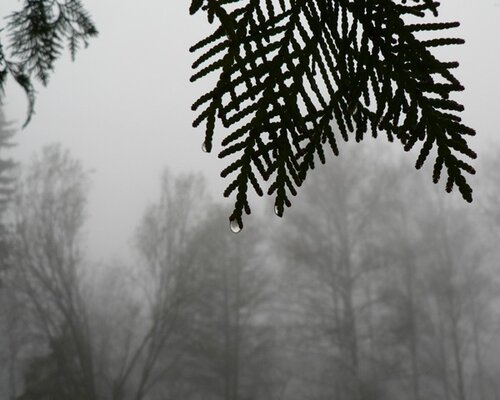капля тумана