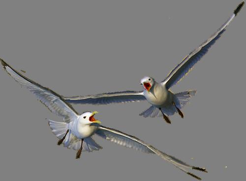 Рисунки, чайки анимация на прозрачном фоне