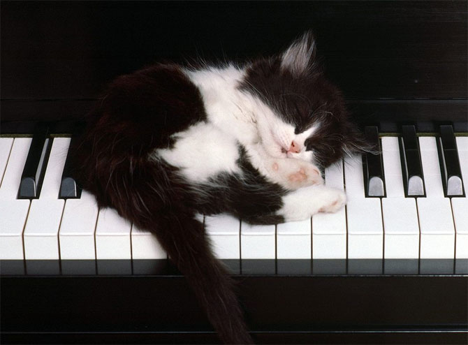 кошки - спит на пианино