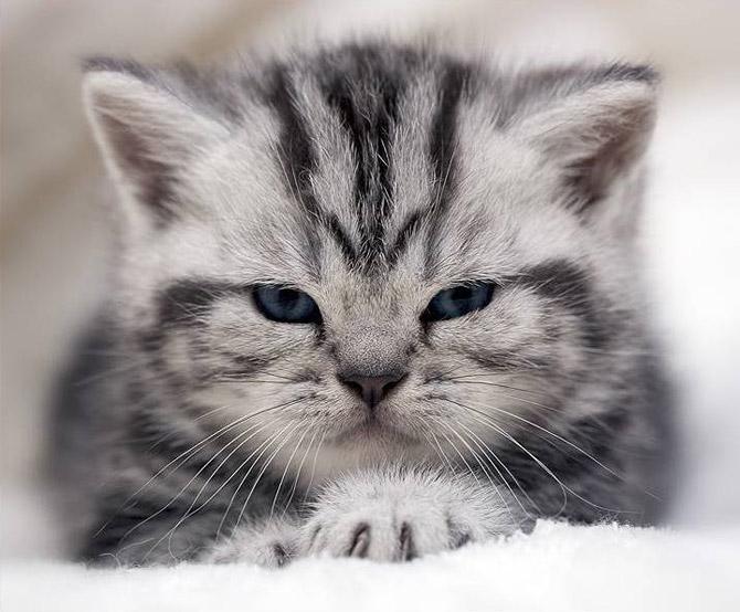 кошки - показал коготки